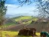 una-veduta-del-paesaggio-di-acquaviva-picena