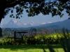 Giardino Panoramico x Degustazione